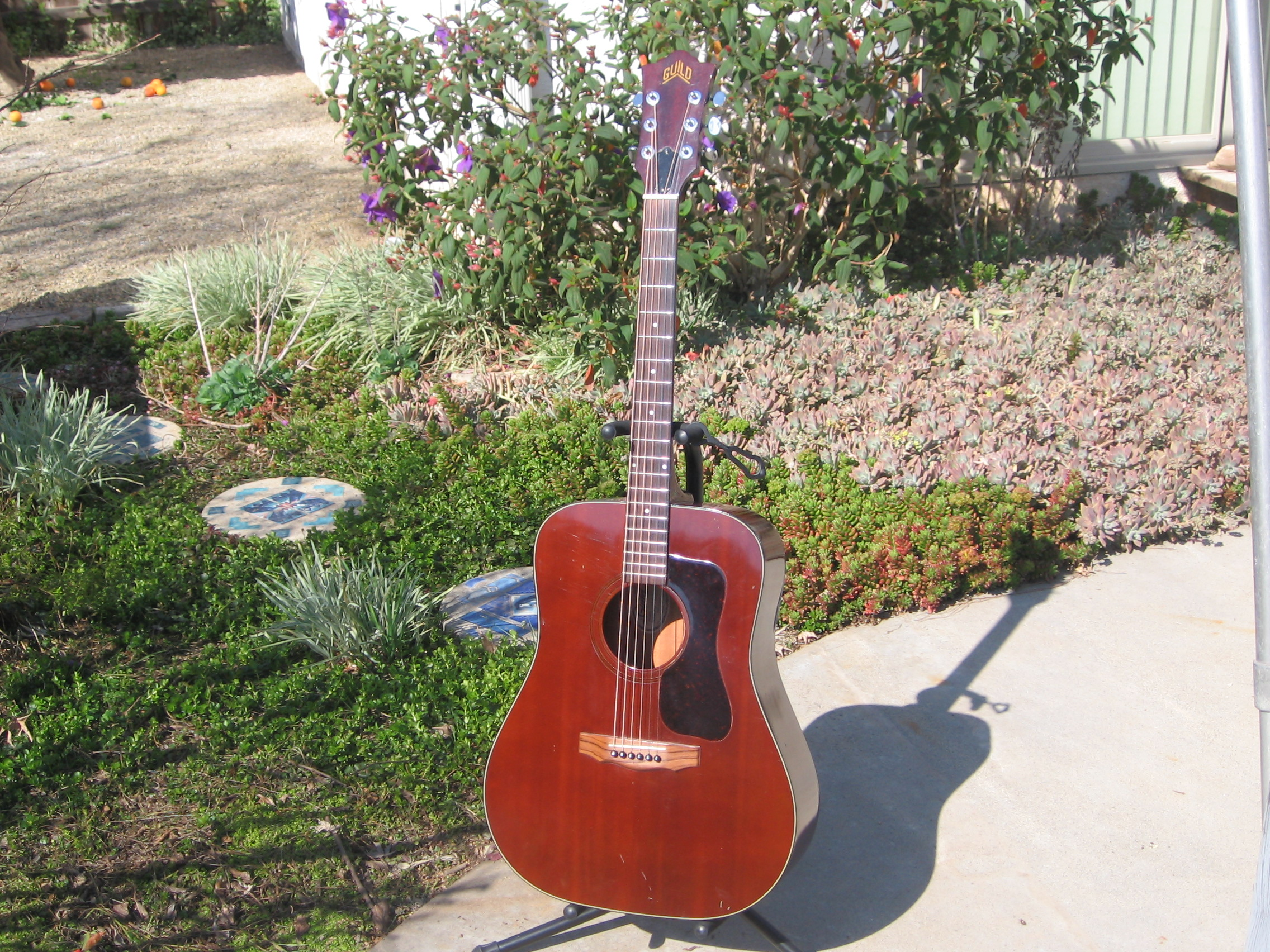 1974 Guild D-25M