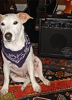 Tim's Dog Brewster and his Randall KH15